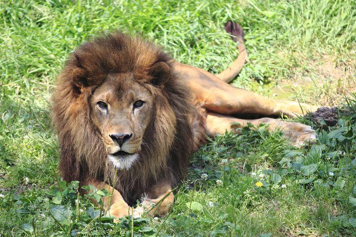 可愛いコアラやライオンを見に行こう!多摩動物公園でデートのサムネイル画像