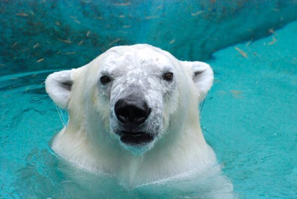 大阪人に愛され続ける【天王寺動物園】でデートを楽しもう♡のサムネイル画像