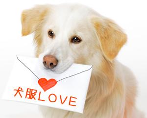 かわいい愛犬に愛情込めた洋服を!犬の服の機能や作り方をご紹介のサムネイル画像