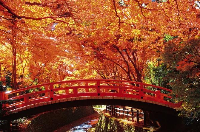 食欲の秋?読書の秋?いえ、童謡の秋です。夕暮れに聴きたい秋の歌!のサムネイル画像
